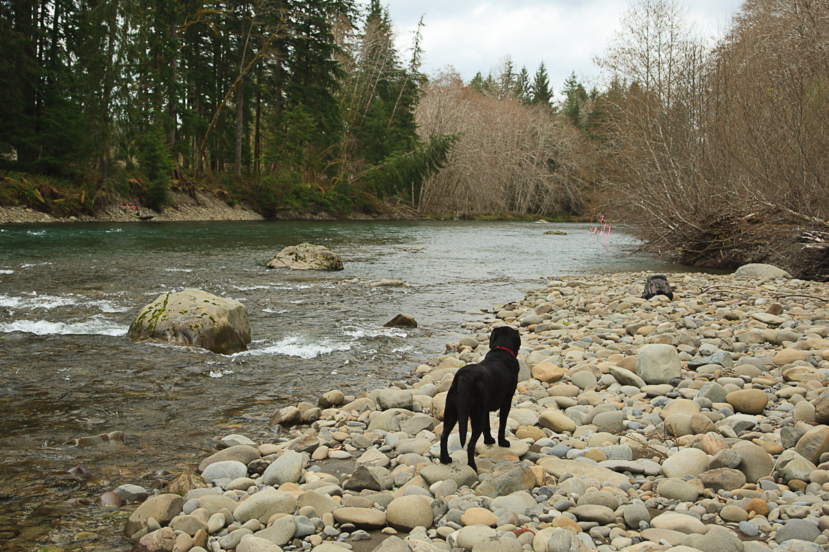Blog posts in hoh rainforest big hole lodge for Hoh river fishing report